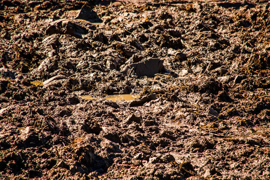 Texture of soil with wet clods of dirt