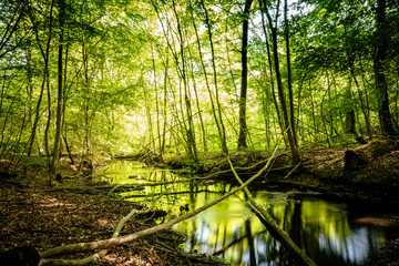 Calm river in a green forest with reflections
