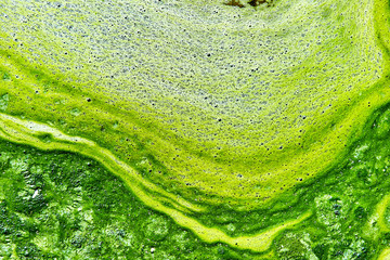 Polluted water with algae
