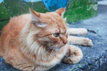 A red cat is resting. Candid.