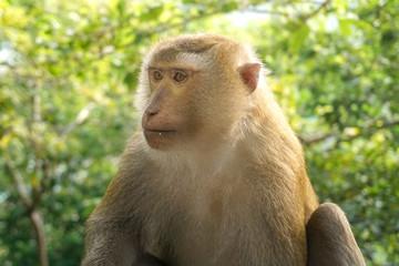 Monkey wildlife with blur background
