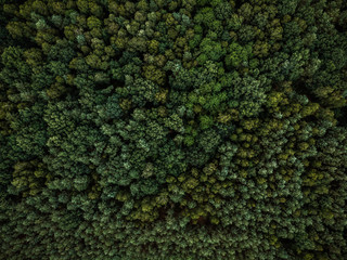 Aerial drone view over evergreen forest Wall mural