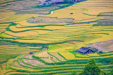 Beautiful rice terraces in Sapa, Vietnam.