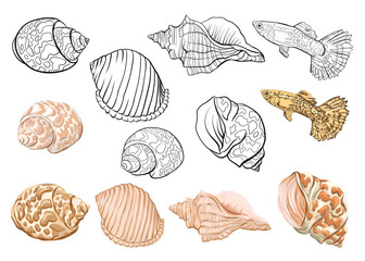 Sea collection. Original hand drawn. Vector illustration. Outline hand drawing.  Isolated on white background. Isolated on white background. Isolated on white background.