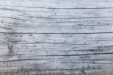Wood natural texture