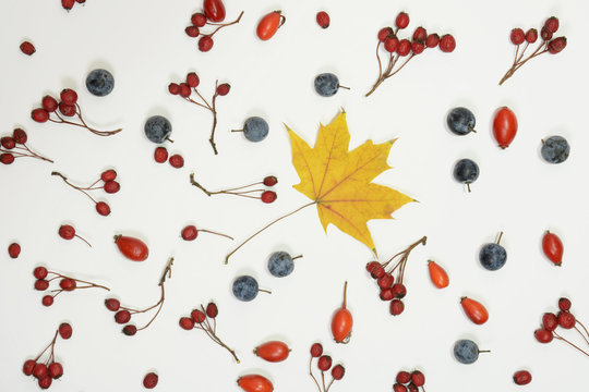 Autumn background. Composition made of hawthorn, dogrose, blackthorn, maple leaf on white background. Flat lay, top view