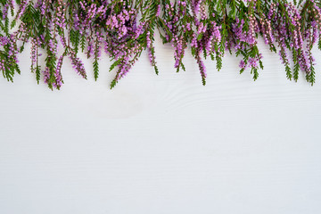 Border of common heather on white background. Copy space, top view.