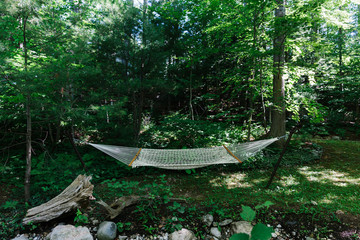 Empty hammock in the woods