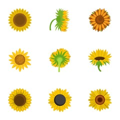 Helianthus icons set. Cartoon set of 9 helianthus vector icons for web isolated on white background