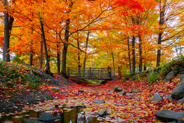 Aluminium Prints Orange Glow Beautiful fall foliage in the northeast USA
