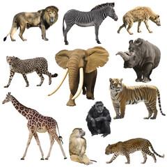 African animals set