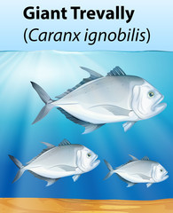 Giant Trevally poster concept