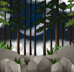 Wood scene at night