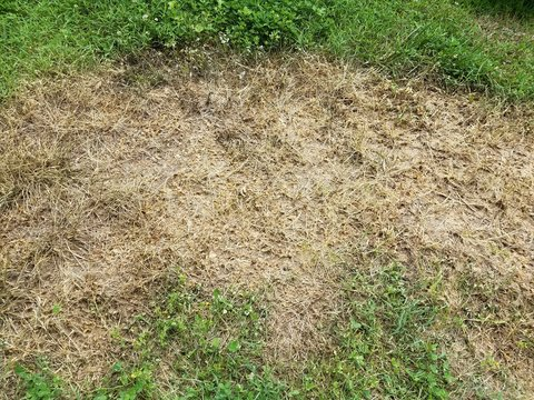 dead and diseased brown grass near green grass lawn and yard