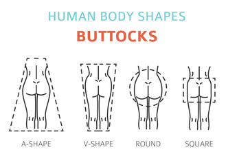 Human body shapes. Woman buttocks types set