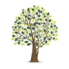 Illustration Tree Design In white background