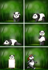 A set of panda