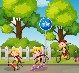 Monkey riding a bicycle and skateboard
