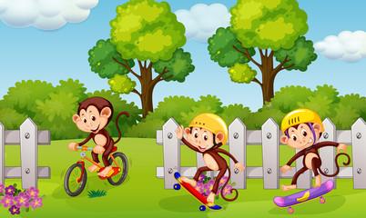 A group of playful monkey