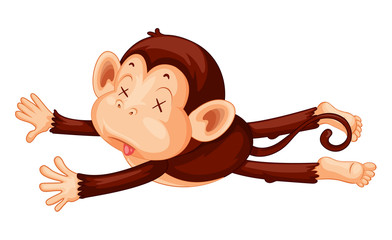 A monkey playdead on white background
