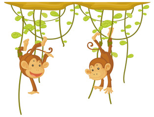 Monkey hanging on the vine