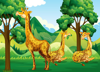 A group of giraffe in forest