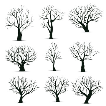Vector illustration : Tree Roots in white background