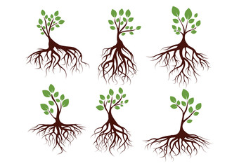 Vector Illustration : Set Green Tree and Roots