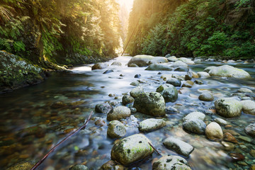 The river at Lynn Canyon in North Vancouver.