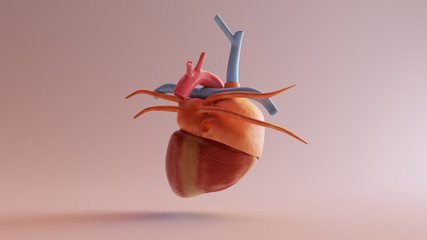 Human Anatomical Heart Model 3d illustration 3d render