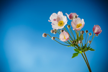 Cute pink flowers on a blue background