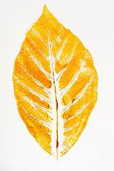 fall leaf print on paper