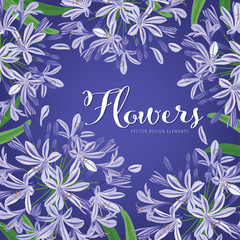 Agapanthus or African lily flowers background template. Vector set of blooming floral for holiday invitations, greeting card and fashion design.