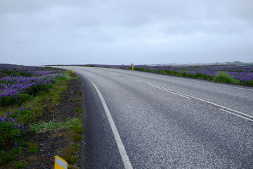Road and flowers in Iceland