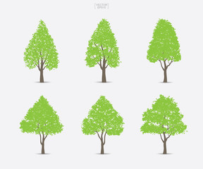Set of green tree isolated on white background for landscape design and architectural compositions with backgrounds. Vector.