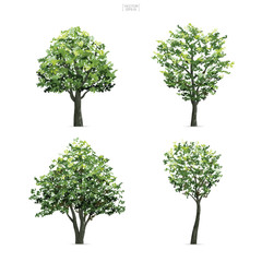 Collection of tree isolated on white background. Natural object for landscape design, architectural decoration, park and outdoor graphic. Vector.