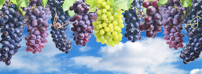 Grapes against the blue sky Fototapete