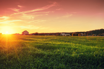 Rural landscape with beautiful gradient evening sky at sunset. Green field and village on horizon  Wall mural