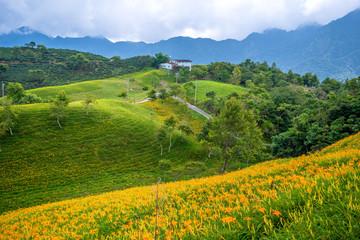 The Orange daylily(Tawny daylily) flower farm at Sixty Rock Mountain(Liushidan.mountain) with blue sky and cloud, Fuli, Hualien, Taiwan