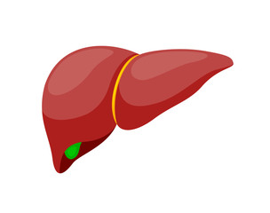 Human healthy liver. Internal organs symbol.. Vector iIllustration info-graphic, isolated on white background.
