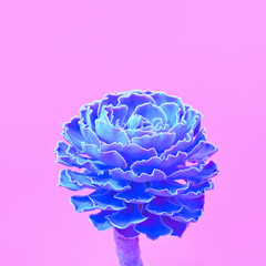 Fashion Neon tropical Aloe in Blue Color. Minimal Trendy stillife on Pink Design background. Surrealism.