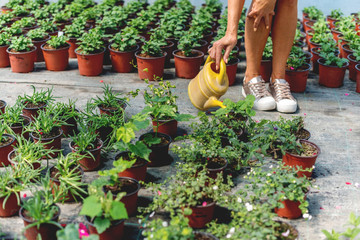 Watering Plants in Greenhouse