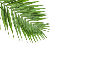 Frame of tropical leaves palms on white background a space for text. Isolated. Top view, flat lay