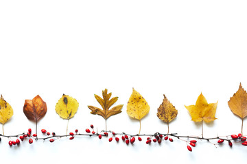 Autumn Background With Colorful Leaves And Red Berries