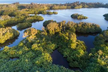 Garças nas plantas da Lagoa de Jacarepaguá