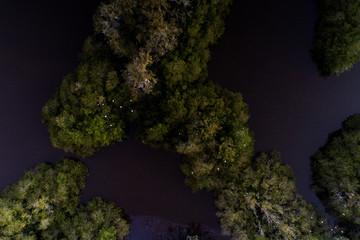 Garças nas árvores da Lagoa de Jacarepaguá