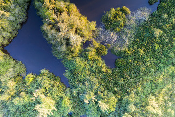 árvores de lagoa, vista aérea