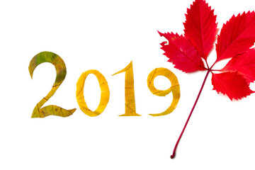2019. digits carved from yellow maple leaves on white background