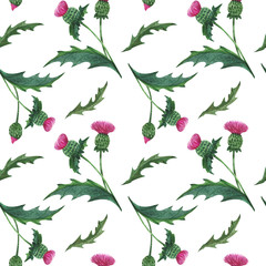 Watercolor thistle seamless pattern