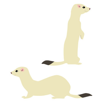 Vector illustration of standing and sitting cute weasels isolated on white background